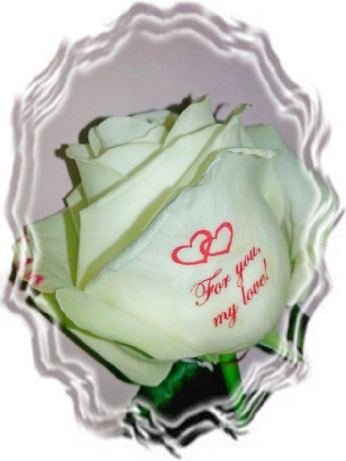 Открытки белые розы для любимой девушки, картинки спичечных коробков